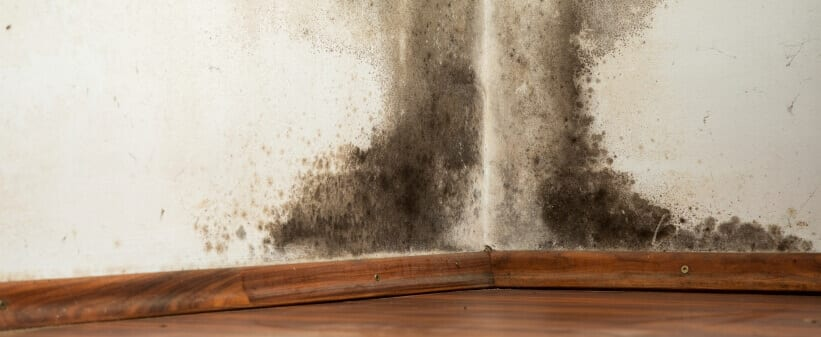 mold remediation for black mold on a wall.