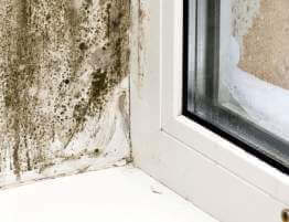 black mold next to a window