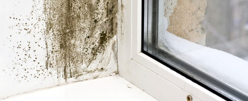 Mold Removal on a window sill.