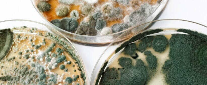 Mold Remediation - Secure Restoration