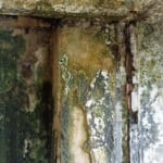 mold-remediation-Wellington-Florida
