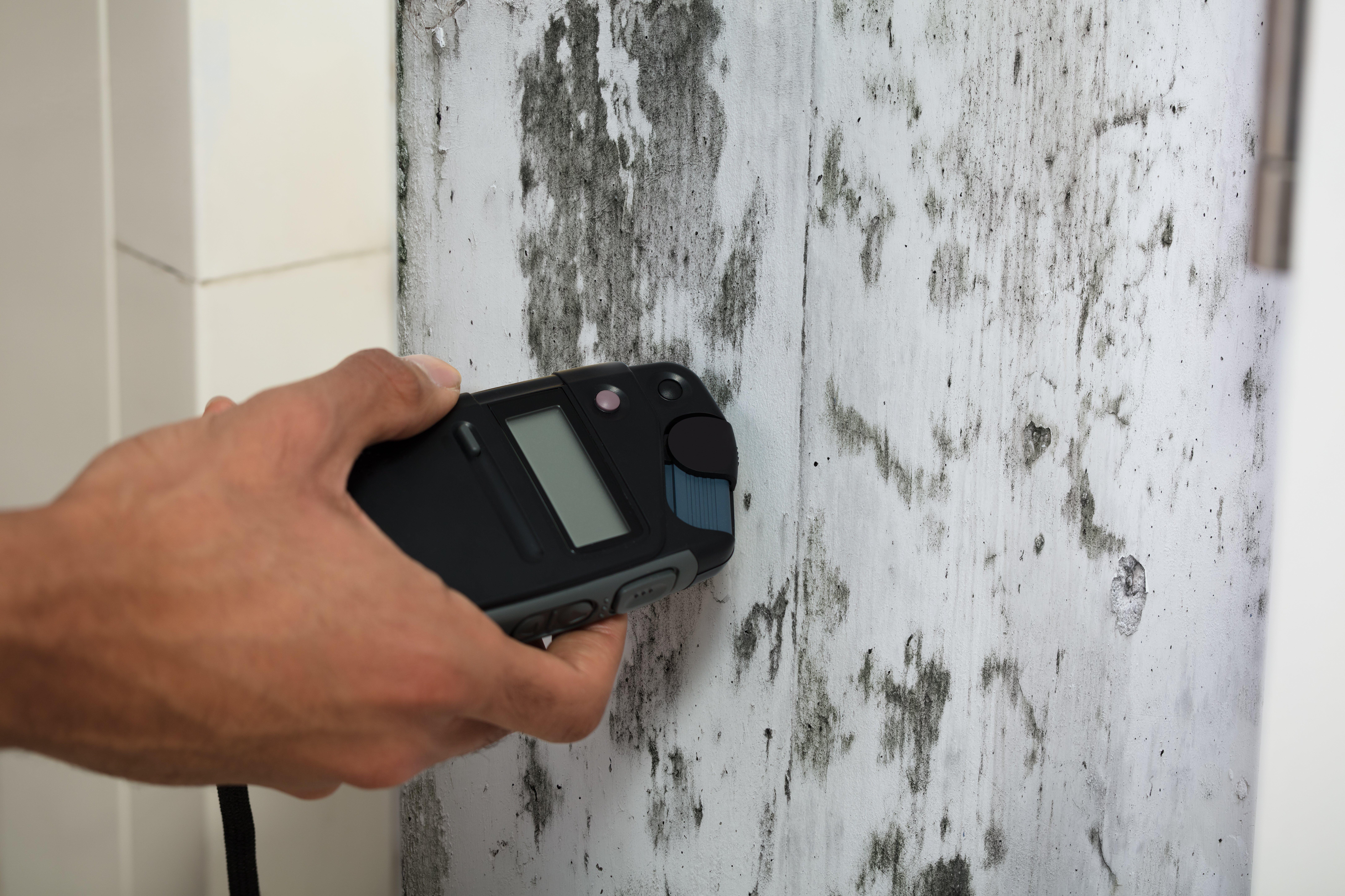 hazardous mold remediation